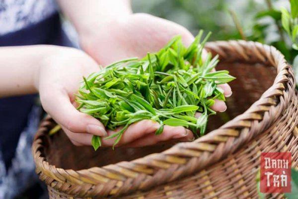 chè móc câu, trà bắc, trà thái nguyên, trà tân cương, trà nõn tôm, chè thái nguyên, chè tân cương, chè nõn tôm, trà ngon, chè ngon, lá trà, lá chè