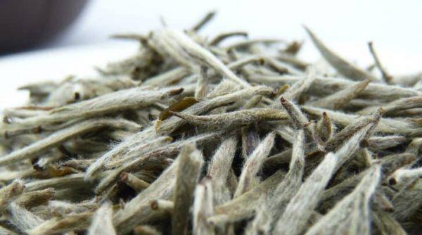 bạch trà, trà trắng, trà cổ thụ