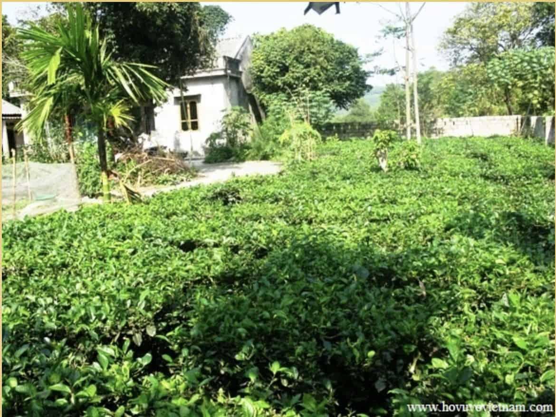 Trà Thái Nguyên: tìm hiểu và mua trà ngon chính gốc tận vườn 3