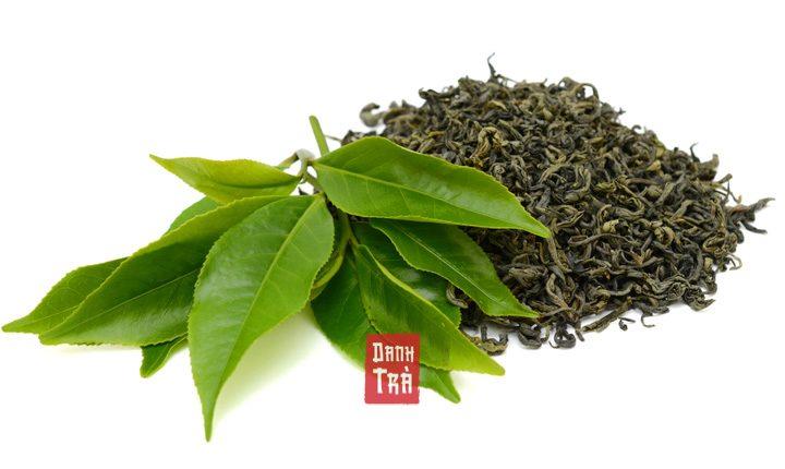 Lá Trà Xanh Tươi có thật sự tốt hơn lá trà xanh khô?