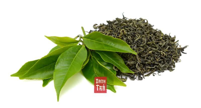 trà xanh, lá trà xanh