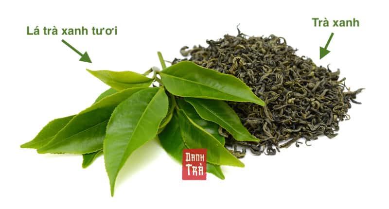 lá trà xanh tươi, lá trà xanh khô, trà xanh