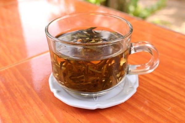 trà mãng cầu, lá mãng cầu, trà mãng cầu xiêm, trà mãng cầu gai