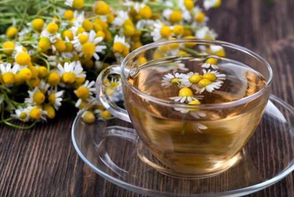 trà hoa cúc, chè hoa cúc