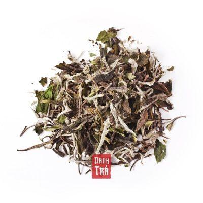 bạch trà, trà trắng
